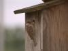 Vogelfuetterung